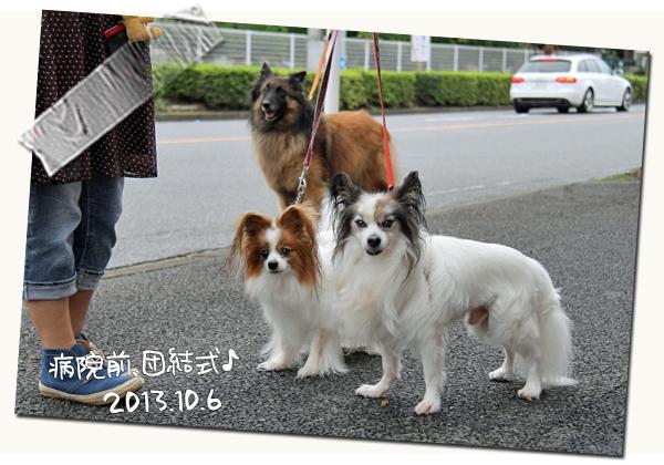 ラビたんの手術と凱旋門賞★☆★ 02