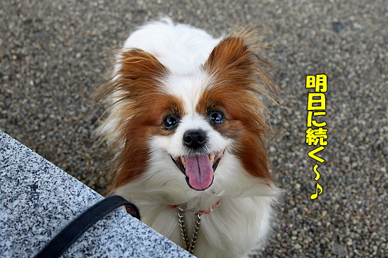 Wiki散歩♪�