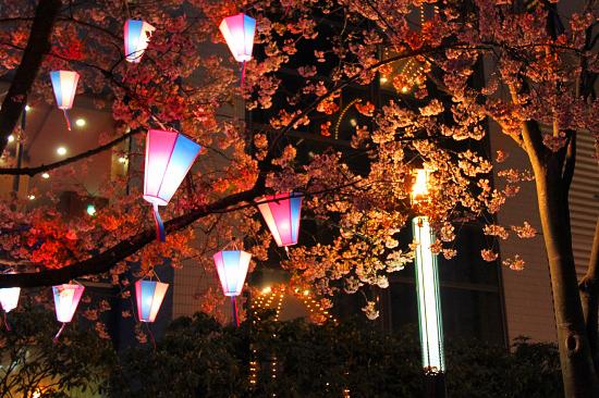 いつかの夜桜 14