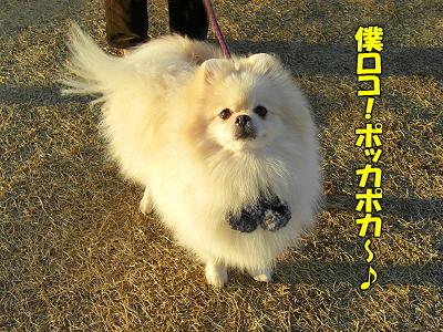 めっちゃ北風orz�