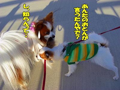 ○○オフ★�