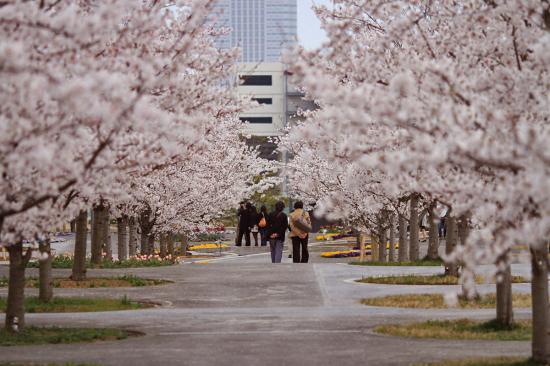 桜坂 15