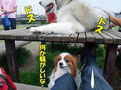 おかえりフーチ★�