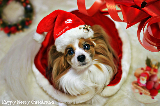 ★☆★Happy Merry Christmas★☆★ 01