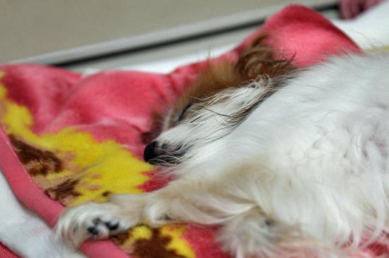 寝てる寝てる寝てる・・・ 01