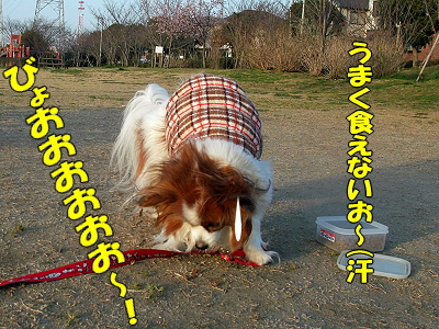 春の強風★�