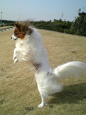 強風で宙に舞いそ〜!
