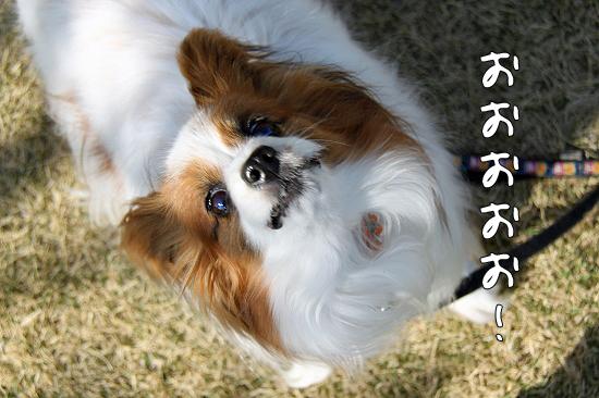 お花見オンライン(前篇) 01