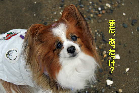 お散歩レビュー(番外篇) 02