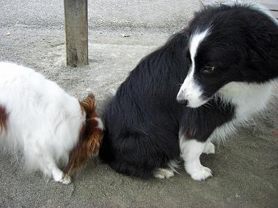 大型犬と一緒�