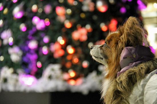 もうすぐクリスマス 01