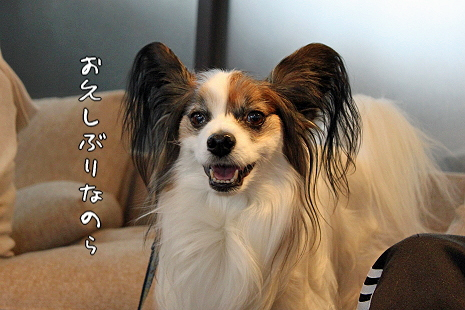 Merry Dog�