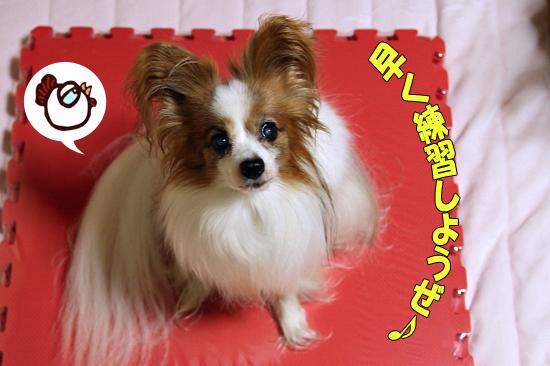 【マツワン★グランプリ】 02