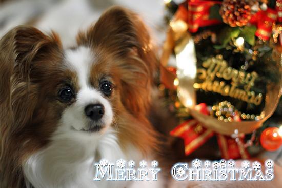 皆さん、Merry Christmas ★☆★ ヽ(`▽´)/ 03