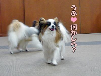 アンディカフェ★�