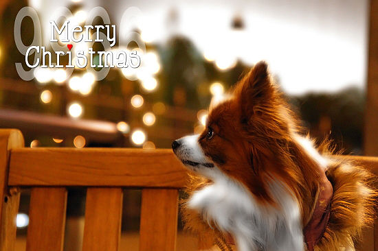 クリスマス★カード 03