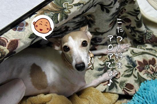 きたーーー! 05