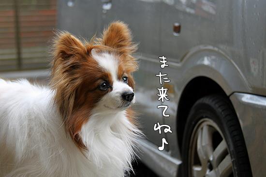 順延のお知らせ★ 03