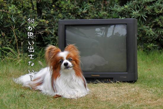 さよなら、|||-_||| 貞子 09