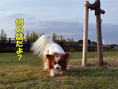 サザカレ2009★�