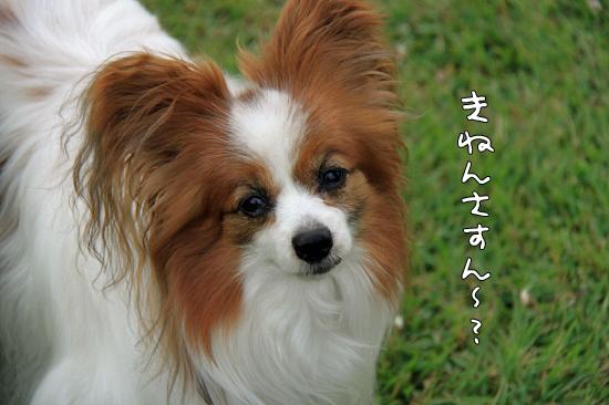 28も誕生日★☆★ 07