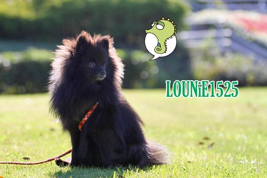 Happy 1st Birthday,LOUNiE ★☆★ 01