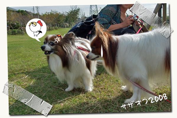 【追悼】デイジーちゃん 04