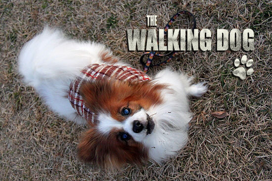 THE WALKING DOG 02