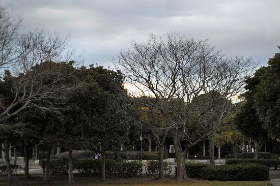 冬草 01