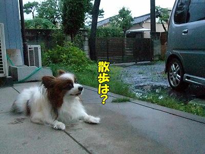 雨の朝・・・�