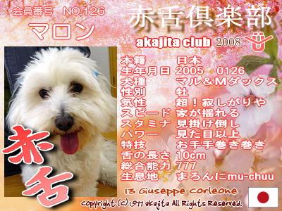 126-maron-2008sakura