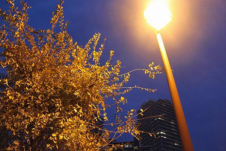 街灯の下で�