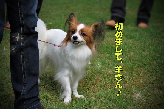 【サザオフ2011】 part6 11