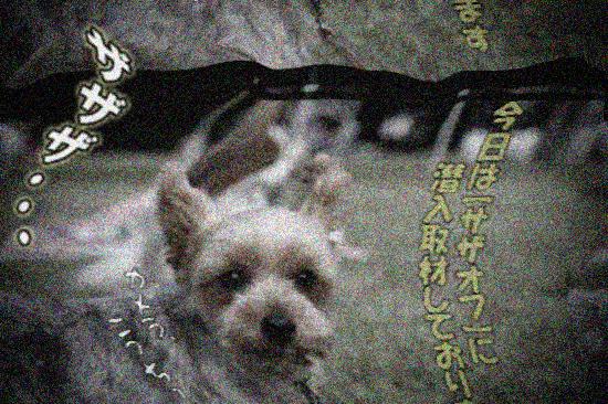 【サザオフ2011】 part5 14