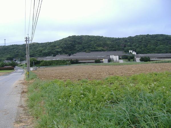 画像瀬戸氏農作物 142