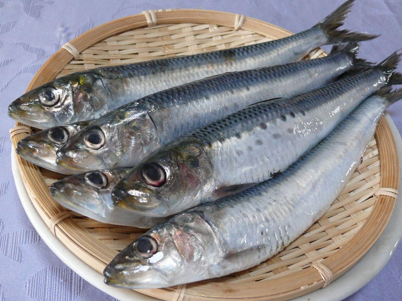 あお ざかな 種類 鮭は白身魚?青魚?気になる魚の分類の謎に迫ってみた