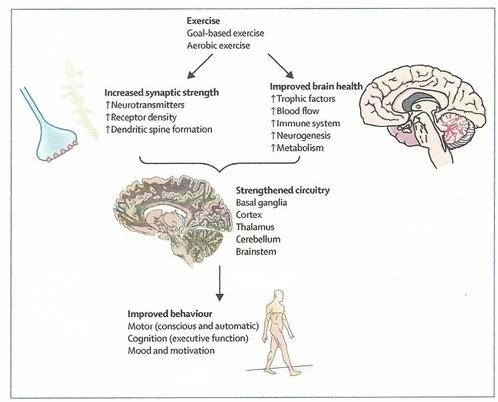 脳血管性パーキンソニズムとは ...