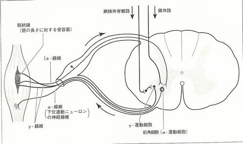 筋緊張制御23