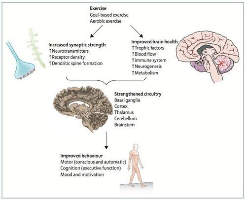 脳血管性パーキンソニズムの ...
