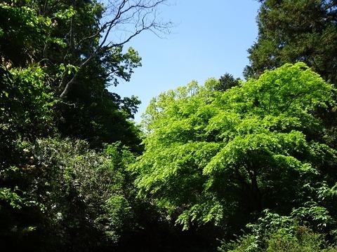 ameba ぬかた園地 1