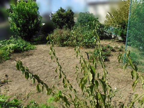 草刈り 4