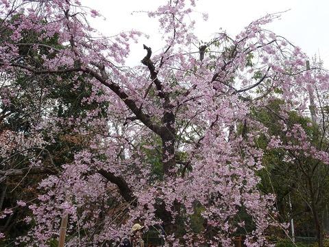 山田池公園 3
