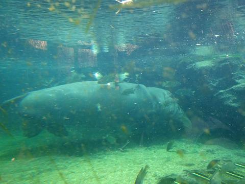 天王寺動物園 4