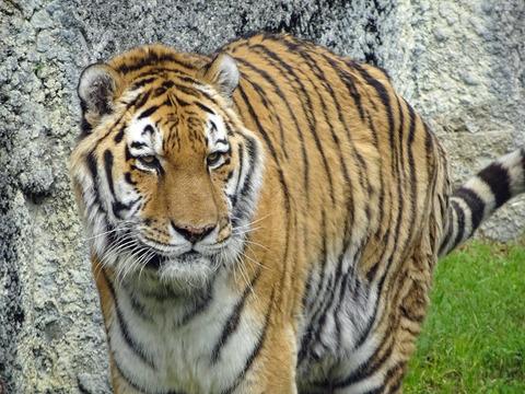 天王寺動物園 7