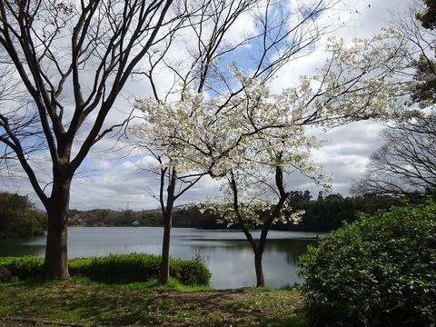 山田池公園 1