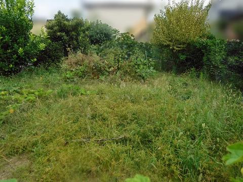 草刈り 2