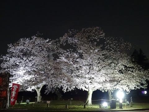 万博記念公園 4