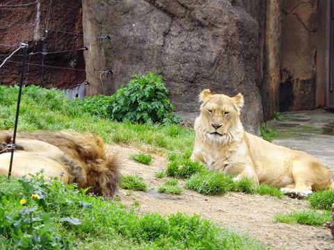 天王寺動物園 6