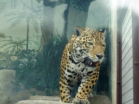 天王寺動物園 8
