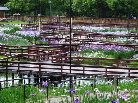 ameba 山田池公園 1